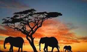 Dudas Luna de Miel en Kenia - 1