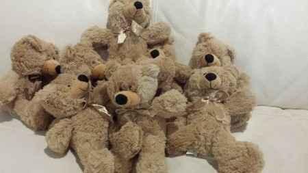 grupo osos