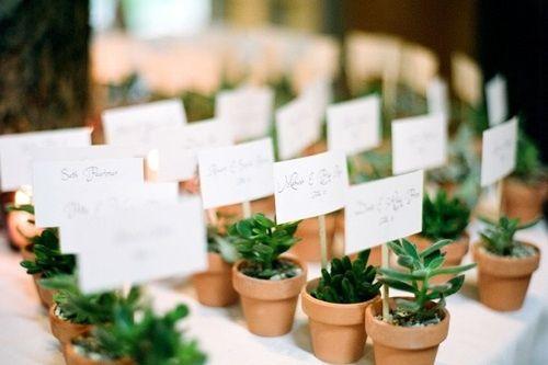 Que os parece regalar plantas como detalles for Donde venden plantas baratas