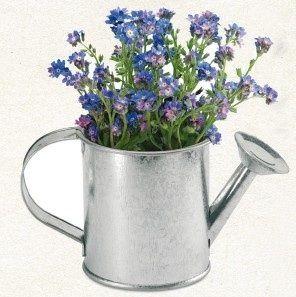 que os parece regalar plantas como detalles