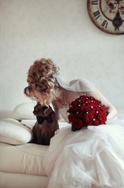 Bodas y gatos