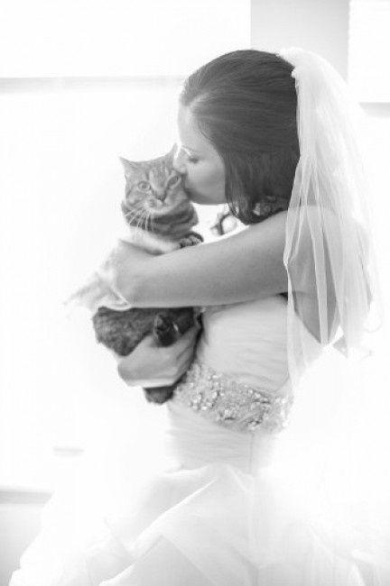 bodas y gatos! - foro bodas