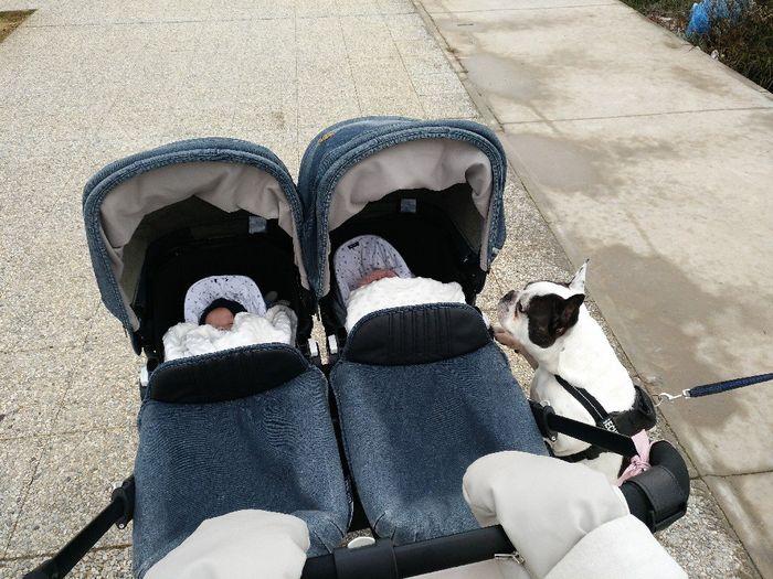 Paseo con bebe y dos perros 1