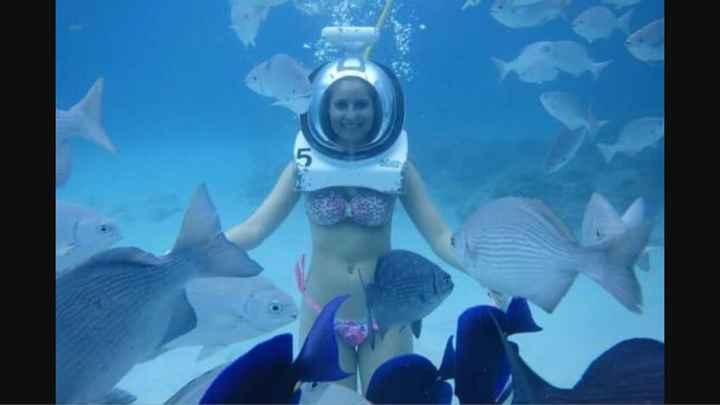 Nadar con delfines en riviera maya - 1