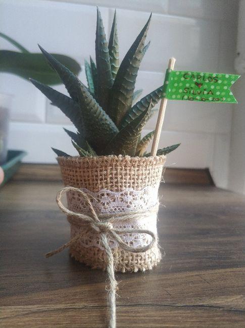Cactus como regalo 2