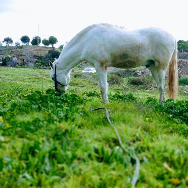 Preboda a caballo 🐎 8