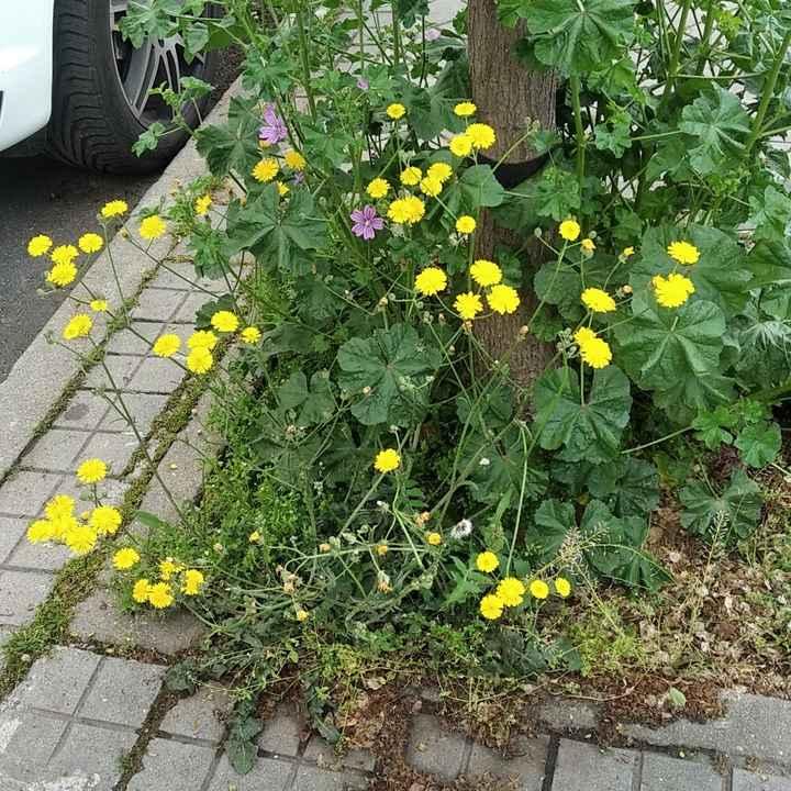 Dudas sobre Ramo de flores silvestres - 1