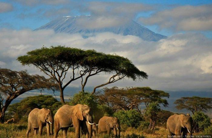 Novi@s Kenia 2020: ¡Preséntate! 1