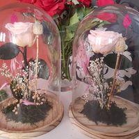 Rosa bella y bestia - 1