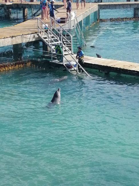 Nado con delfines u otros animales en Riviera Maya - 1