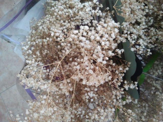 flores secas 2