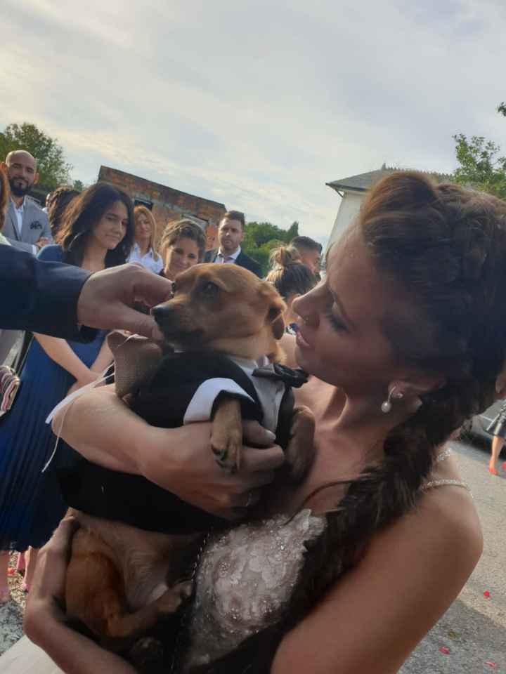 Perro en la ceremonia - 1