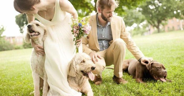Llevar mascotas a la boda. ¿A favor o en contra? 1