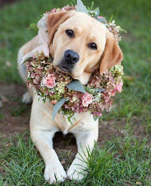Esta MASCOTA... ¿estaría en tu boda? 1