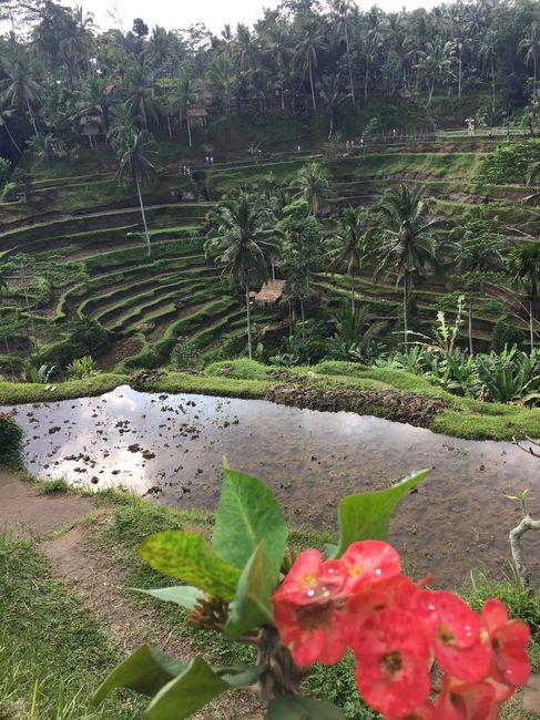 Bali - Mi luna de miel. Tip´s y consejos 4