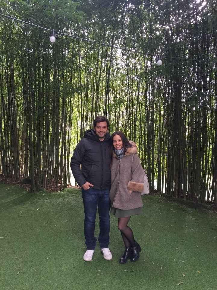 Entre bambúes
