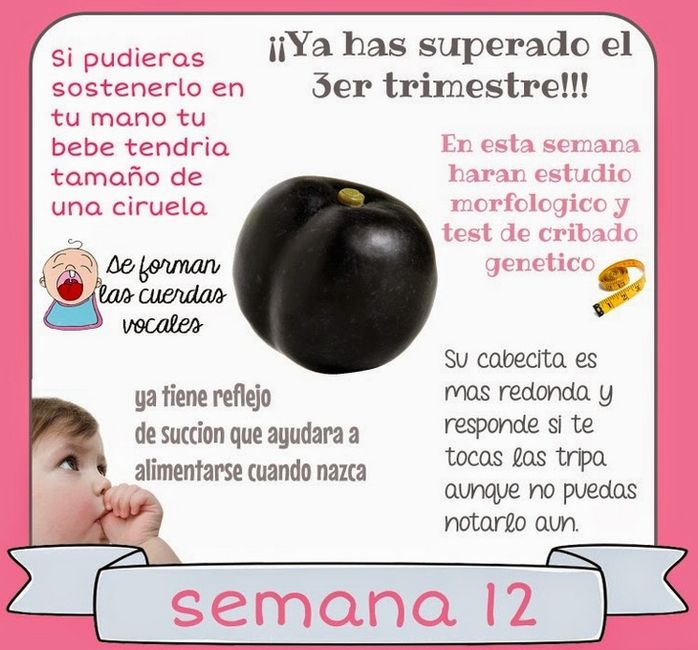 Semana 12 de embarazo