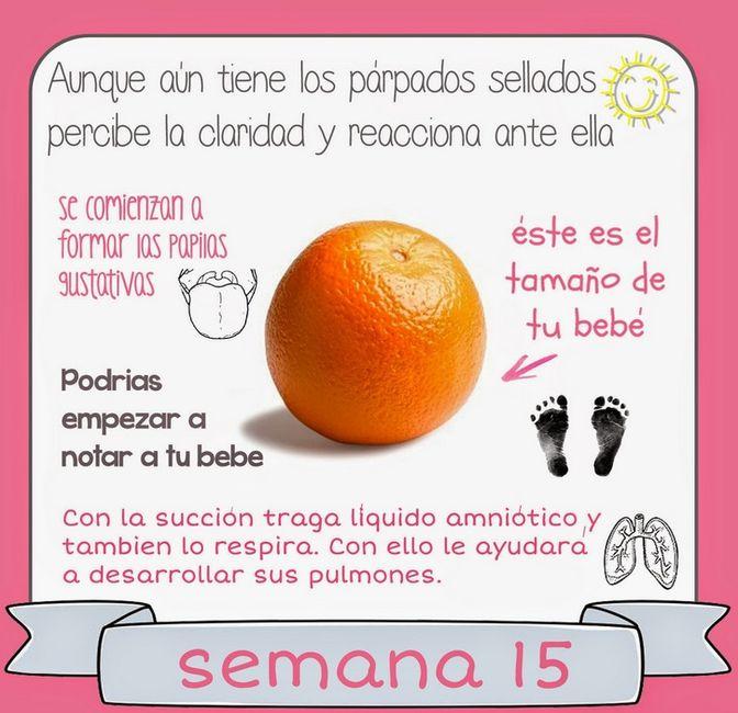 Semana 15 de embarazo