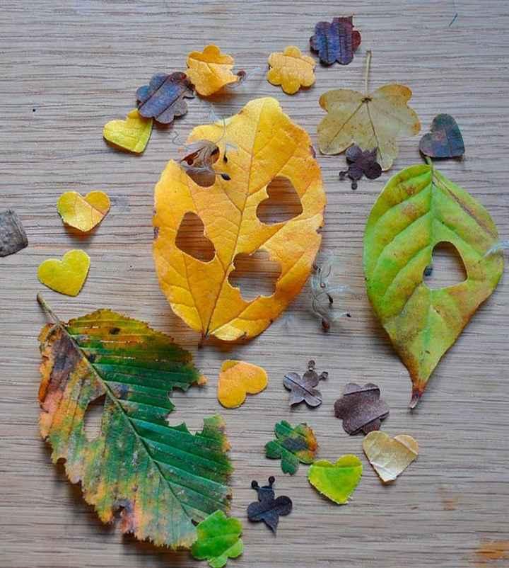 Confeti Biodegradable