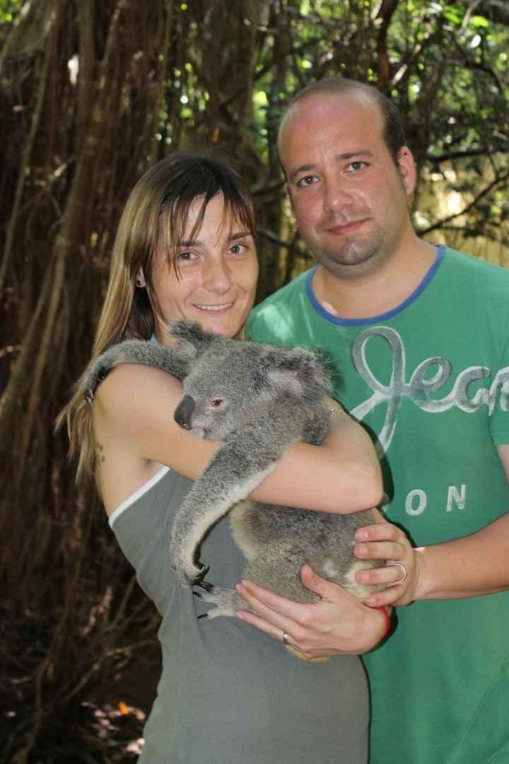 momento koala