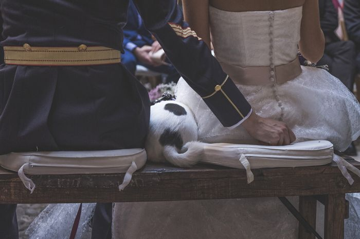 Llevar mascotas a la boda. ¿A favor o en contra? 2