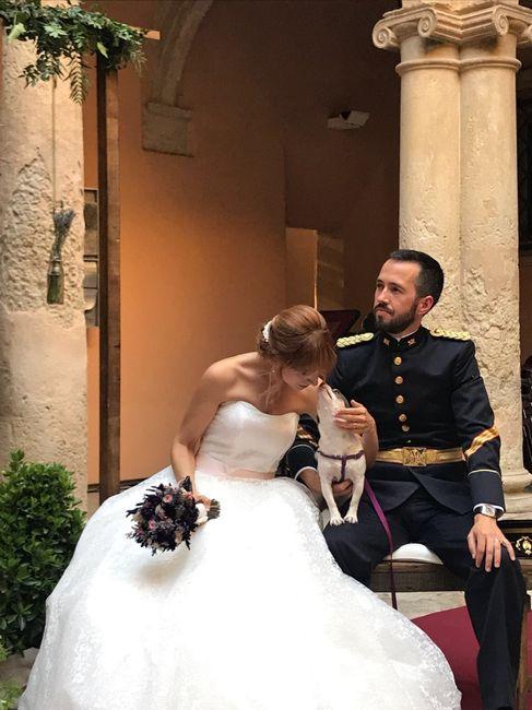 Llevar mascotas a la boda. ¿A favor o en contra? 4
