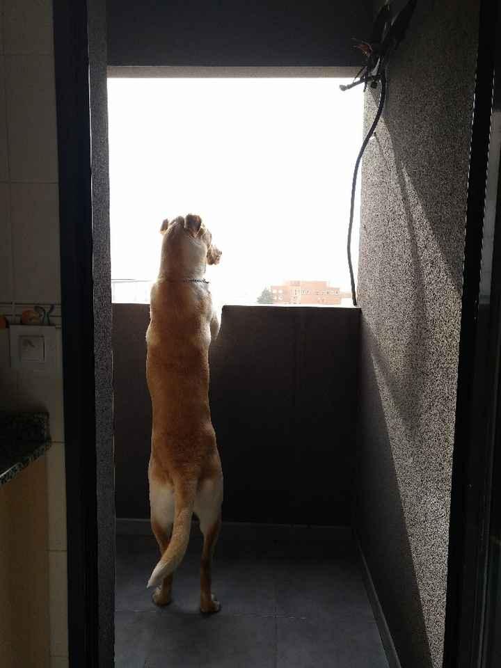 Mascotas en casa: ¿sí o no? - 1