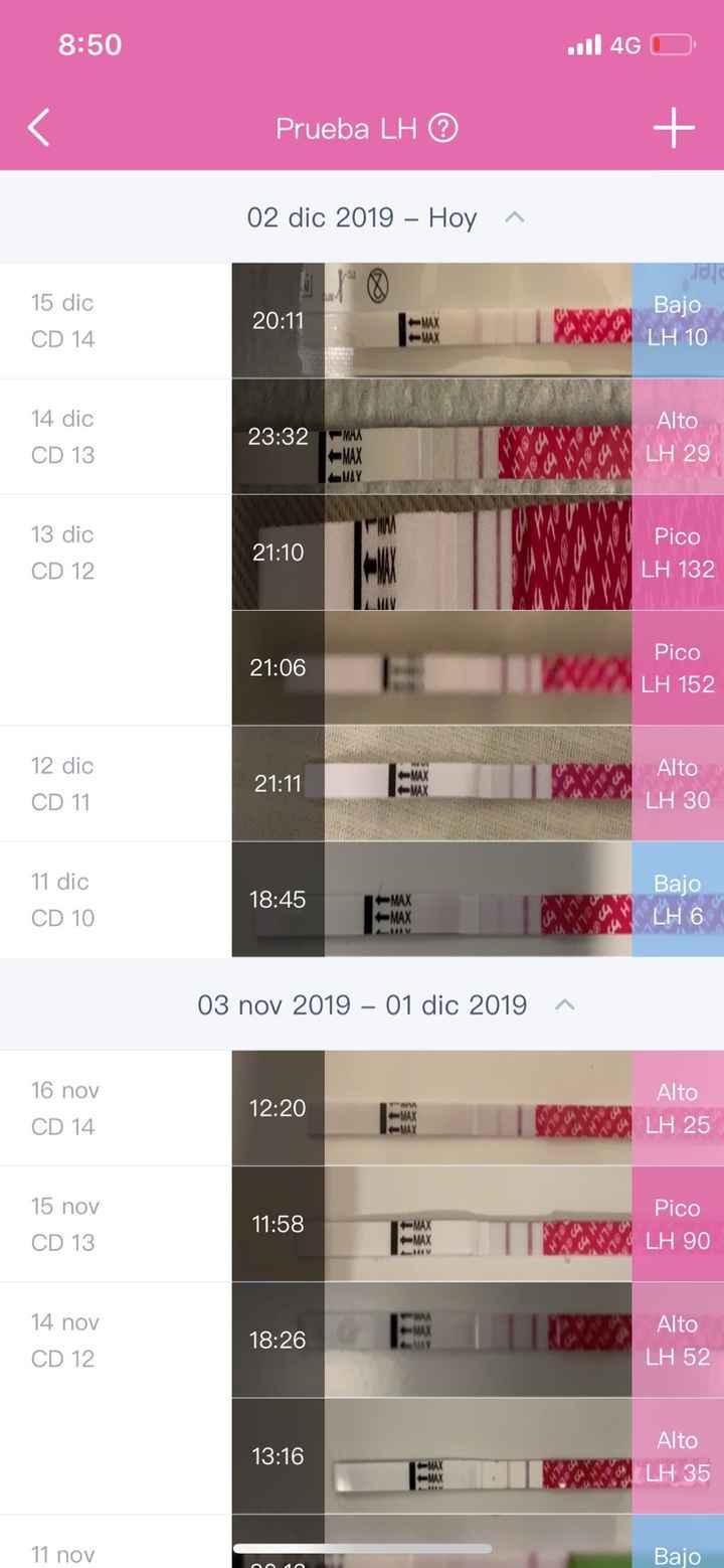 Buscadoras Diciembre 2019 - 1
