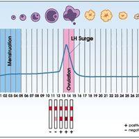 Expertas en test de ovulación help!!! - 1