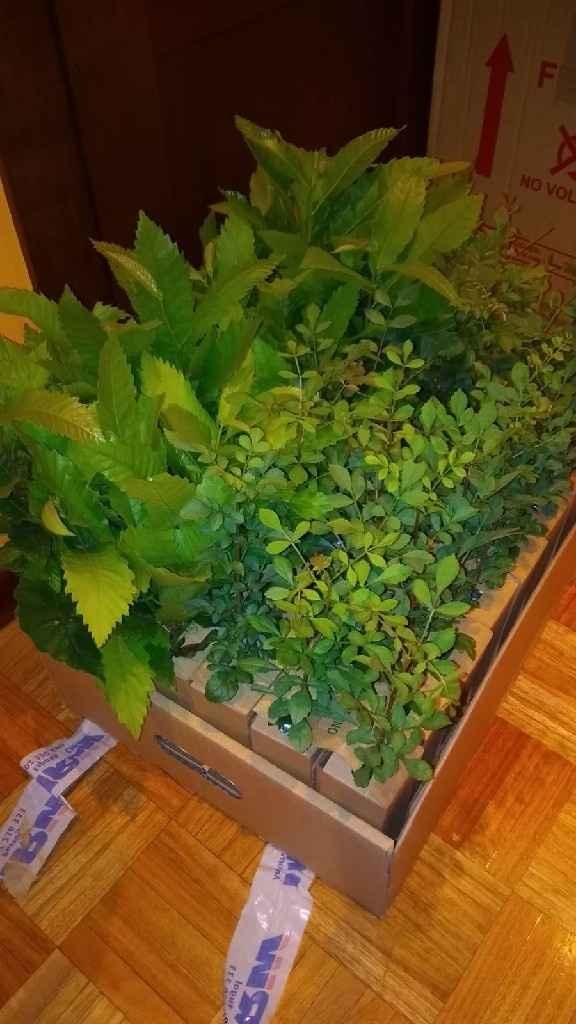 Bolsas papel para regalar plantas - 1