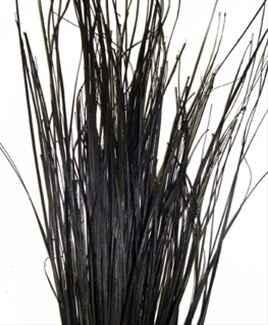Beargrass negro