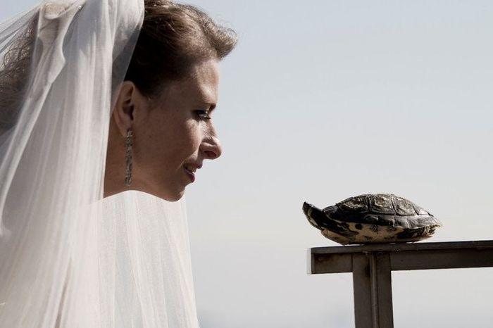 Mi Perrhijo en mi boda 1