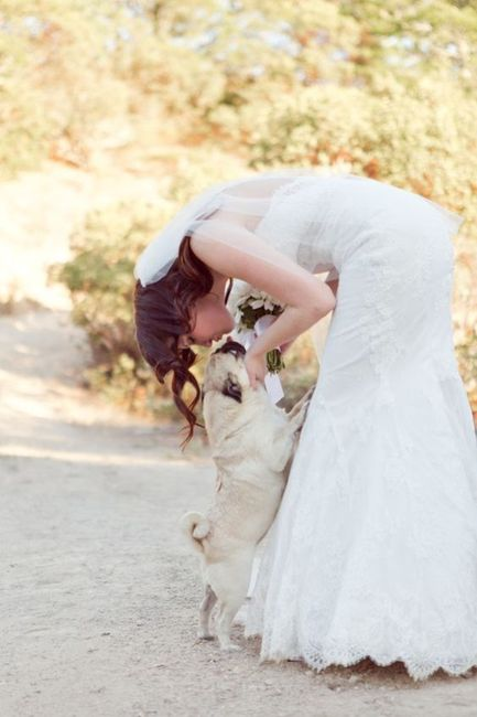La mejor foto de boda: ¡la MASCOTA! 1