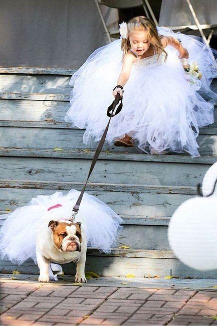 La mejor foto de boda: ¡la MASCOTA! 2