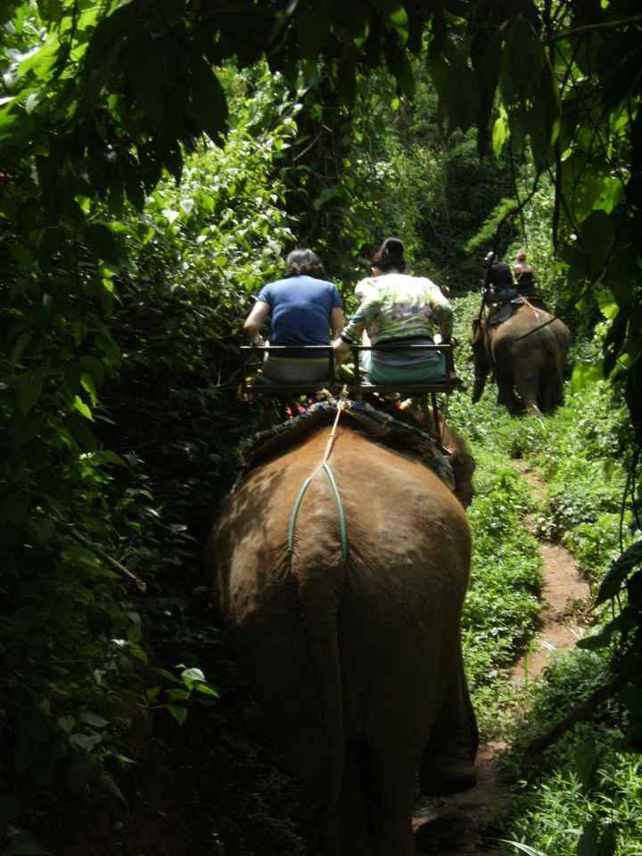 Montados en elefante