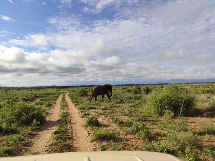 ¡Crónica de nuestra luna de miel: Kenya y Zanzíbar! Parte 1 6