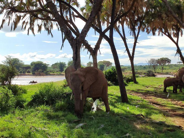 ¡Crónica de nuestra luna de miel: Kenya y Zanzíbar! Parte 1 7