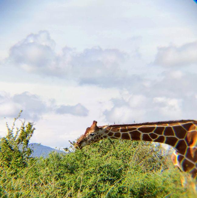 ¡Crónica de nuestra luna de miel: Kenya y Zanzíbar! Parte 1 8