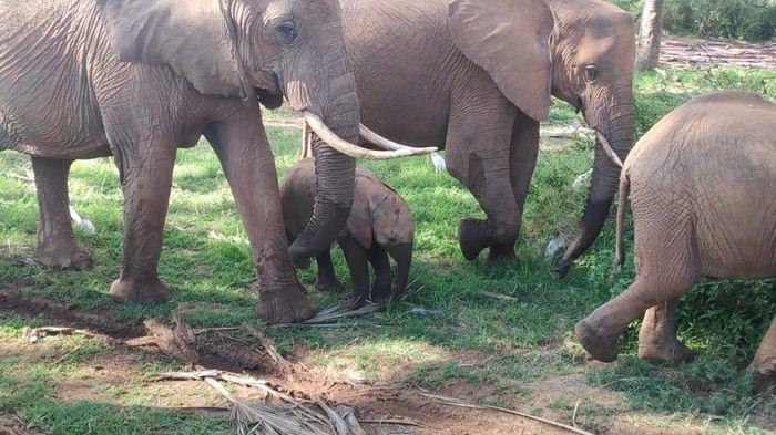 ¡Crónica de nuestra luna de miel: Kenya y Zanzíbar! Parte 1 10
