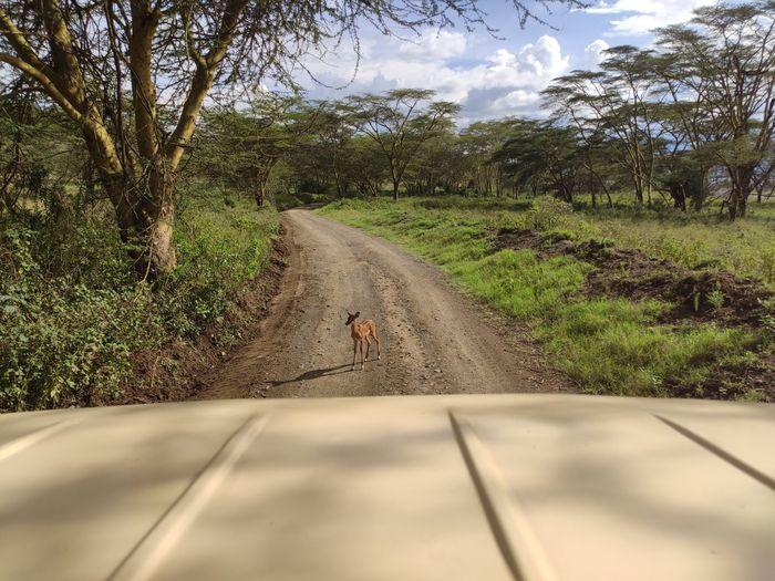 ¡Crónica de nuestra luna de miel: Kenya y Zanzíbar! Parte 1 15