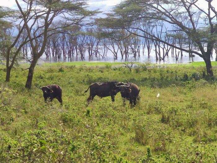 ¡Crónica de nuestra luna de miel: Kenya y Zanzíbar! Parte 1 16