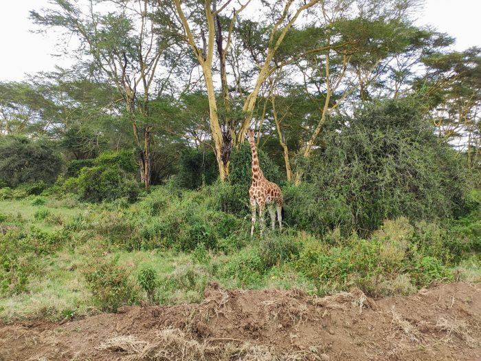 ¡Crónica de nuestra luna de miel: Kenya y Zanzíbar! Parte 1 17