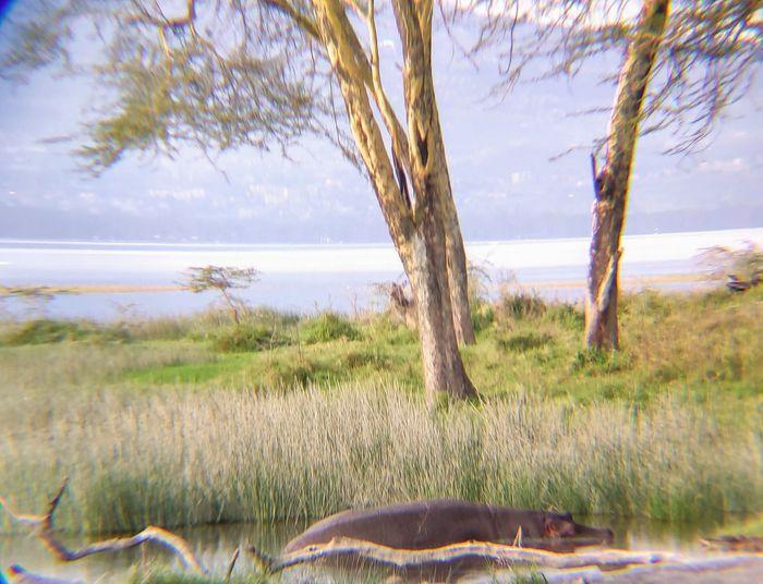 ¡Crónica de nuestra luna de miel: Kenya y Zanzíbar! Parte 1 19