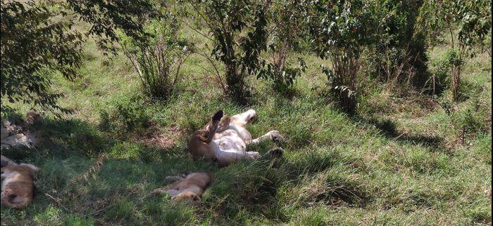 ¡Crónica de nuestra luna de miel: Kenya y Zanzíbar! Parte 1 28