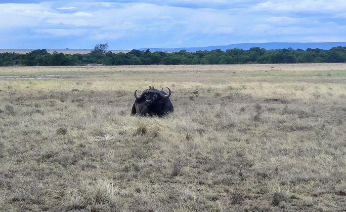 ¡Crónica de nuestra luna de miel: Kenya y Zanzíbar! Parte 1 36