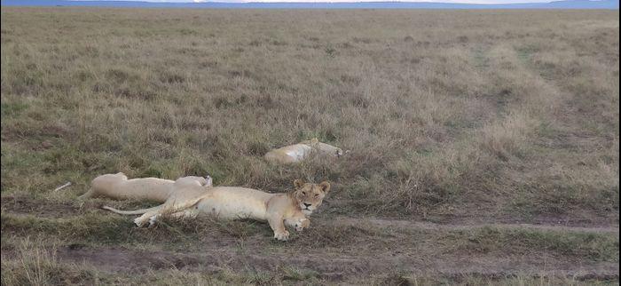 ¡Crónica de nuestra luna de miel: Kenya y Zanzíbar! Parte 1 37