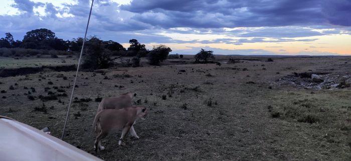 ¡Crónica de nuestra luna de miel: Kenya y Zanzíbar! Parte 1 38