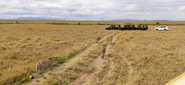 ¡Crónica de nuestra luna de miel: Kenya y Zanzíbar! Parte 1 39