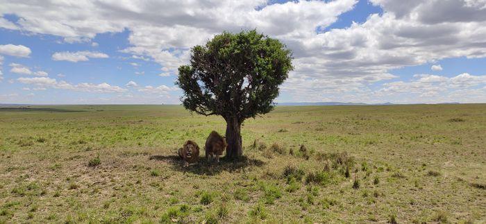 ¡Crónica de nuestra luna de miel: Kenya y Zanzíbar! Parte 1 43