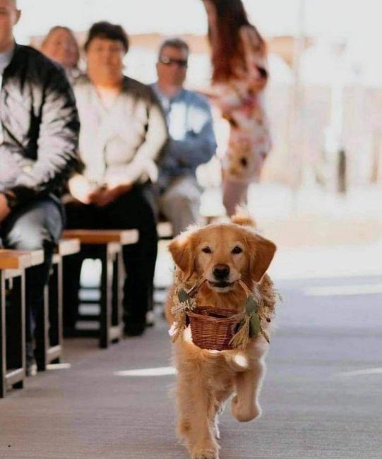 Tus Mascotas en tu boda 🐕🐩🐱 1